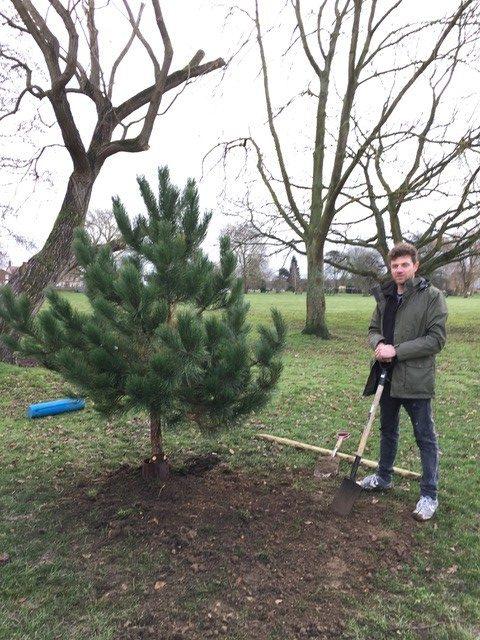 New Tree e