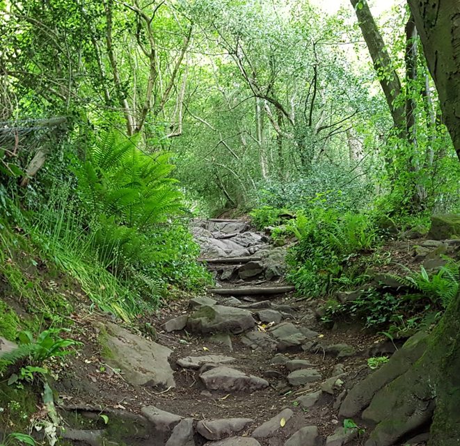 Photo of Woodland Footpath